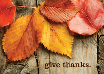 Give Thanks Autumn Leaves Thanksgiving Cards